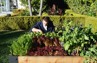 Reed Newman works in a client's vegetable bed. Photo courtesy of Reed Newman