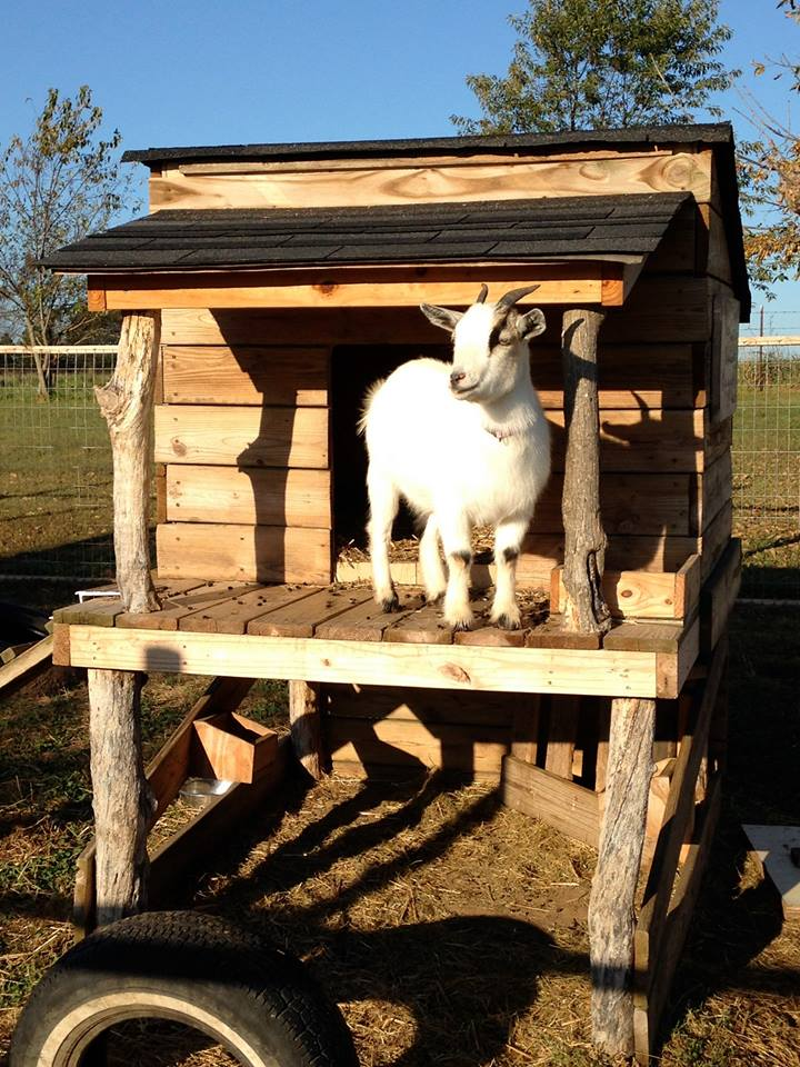 Pallet Wooden Made Goat House Shelter Pallet Ideas Recycled