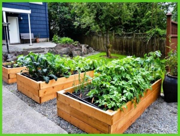 What Size Wood Raised Garden