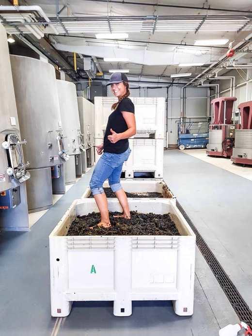 Grape Stomping, foot treading, work at a winery