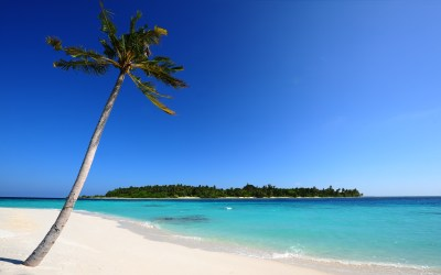 palm-tree-beach-island-blue-ocean-sand_095462.jpg | Palm ...