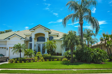 St Petersburg Landscape Design  Tampa and Clearwater
