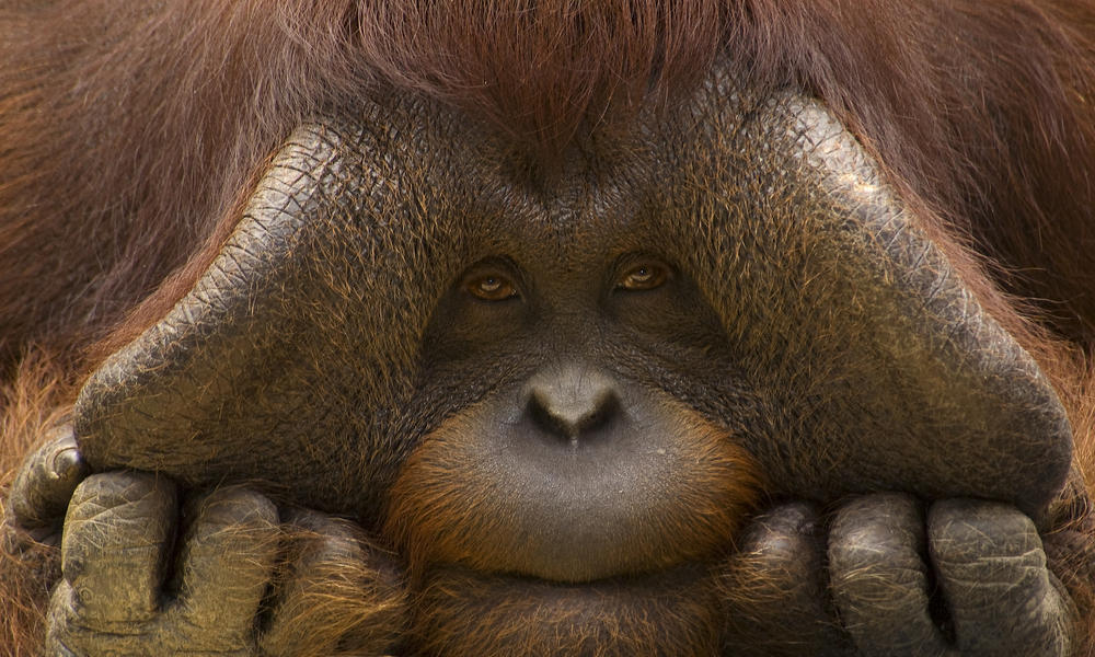 species under threat palm