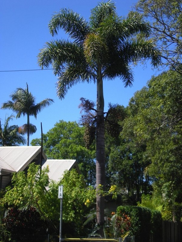 Identify People' Australian Palms