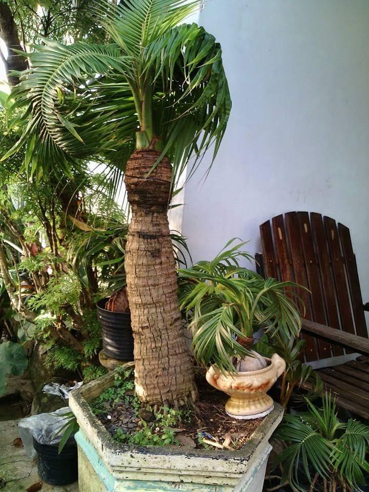 Kerala Plants And Trees