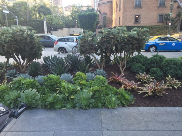 succulent landscaping in downtown