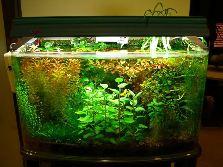 高溫水草栽培實驗 - 沼澤缸之家