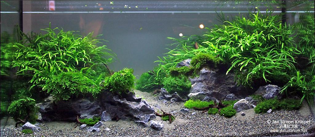 2012 年德國「水草缸之藝術」水草造景大賽成績 - 沼澤缸之家