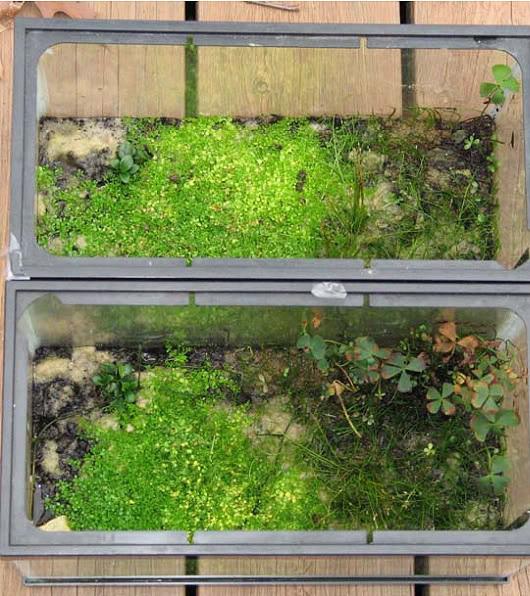 用無水啟動法設置天然水草缸 - 沼澤缸之家
