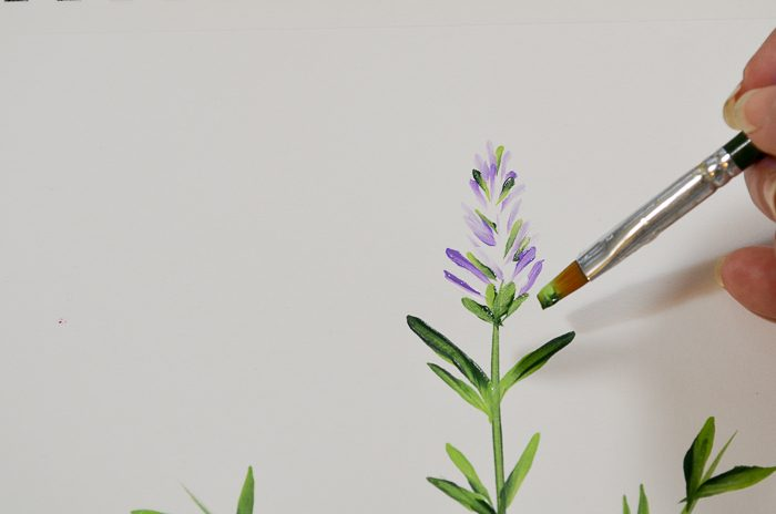 How to Paint Lavender buds calyx
