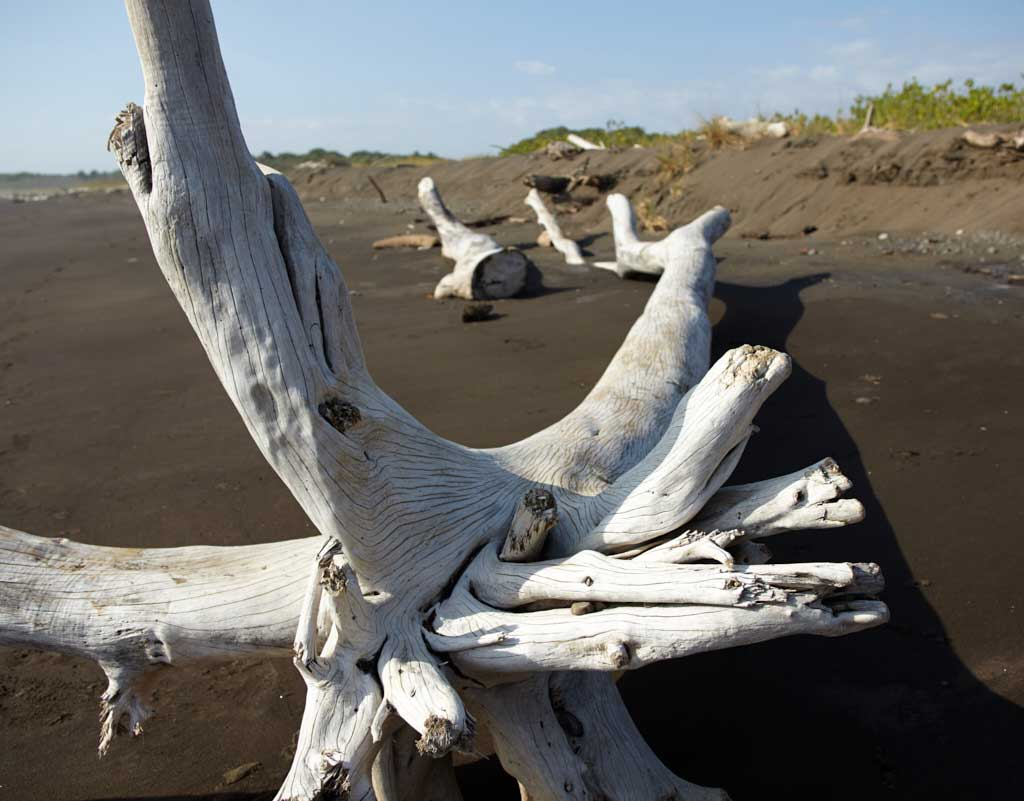 Three trunks of white driftwood sit on a dark sand beach.