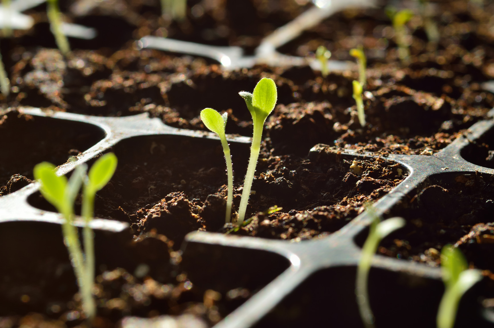 It Only Takes A Seed 7 Fundamental Steps To Build Your