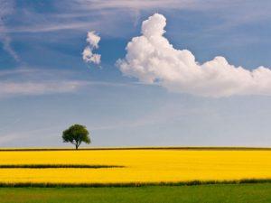 Choosing Mindfulness
