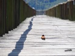 CarreteraAustral_03539