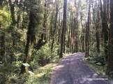 CarreteraAustral_4932