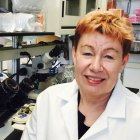 Pancreatic cancer researcher immigrated to the U.S. from the Netherlands