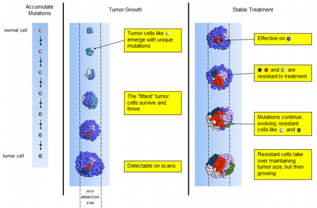 Stable Tumor Chemotherapy