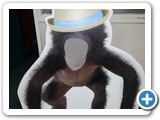 Monkey Cutout for Pumpkin Patch