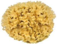 zeespons – natuurlijke spons – Natuur spons – natuurspons – zeespons – natuurlijke sponzen