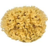 Natuur spons – natuurspons – zeespons – natuurlijke spons – zee spons – natuurlijke sponzen