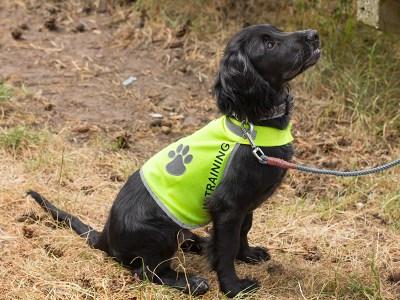 Honden_trainingsvest-trainingsvest_hond-reflecterend-hondenhesje_hesje_hulphond