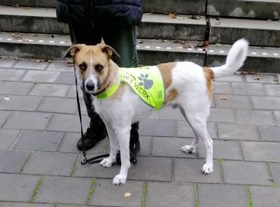 honden trainingsvest - trainingsvest hond - reflecterend hondenhesje – hesje hulphond