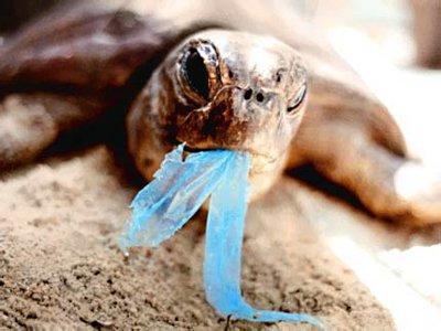 Risultati immagini per plastica mediterraneo