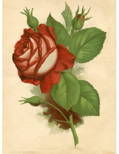 Rose vintage da stampare  Pane Amore e Creativit