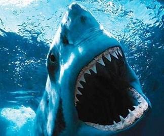 nadar-con-tiburones