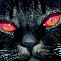 El Gato  que paseaba por el INOF