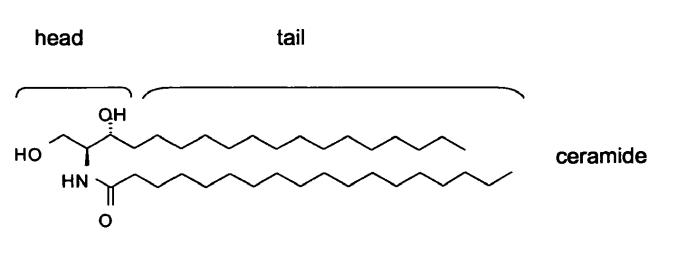 struktur-ceramide-makanan-penurun-kolesterol-alami
