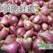 41-00-2紅蔥頭的營養價值與好處
