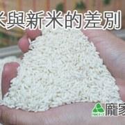 79-00-2端午節包粽子要用新糯米還是舊糯米?糯米越白越好?