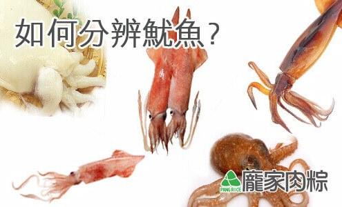 92-00魷魚、花枝、軟絲、小卷、透抽、章魚,傻傻分不清楚?(龐家肉粽粽子食材介紹)
