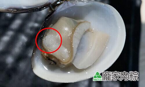 98-03蛤蜊的貝殼肌,也就是小小的干貝