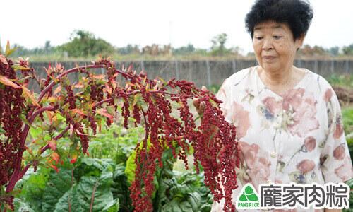 熟成之後就會變成漂亮的紅色,所以才會被稱為「紅藜」、「穀物中的紅寶石」。