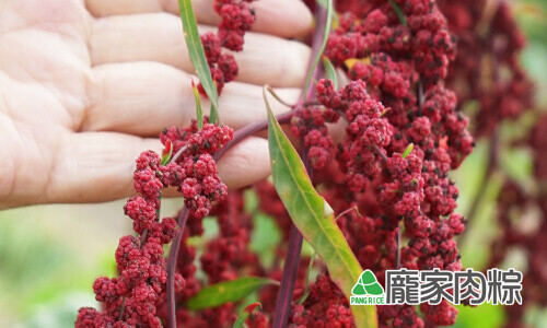 112-03台灣紅藜皆為紅色外皮,所以被稱為紅藜