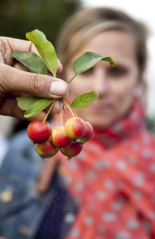 Pommes Ariane 8