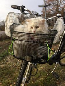 Provisorisk katt -transportskorg till cykel av Fanny Klarström