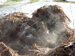 Brinnande gödsel!  När gödseln svalnat kan man säga att det är brunnen gödsel. Om högen får ligga ett år så fortsätter nedbrytningen och gödseln blir pulverformig. Då säger man att den är välbrunnen.