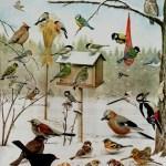 Mata vinterfåglarna