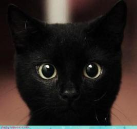 black-cats-pictures-13