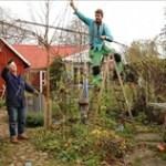 Allt om trädgård webb-tv