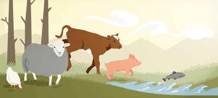 djurskydd