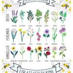 Blommor som våra bin gillar ???