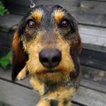 Hundögon sätter fart på må bra-hormoner