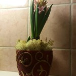Om hyacinten doftar för starkt!