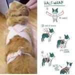 Hjälp för skotträdda hundar