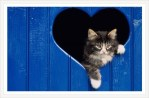 Pankpraktikan önskar alla en skön Alla hjärtans dag ❤