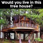 Istället för plintar används levande träd